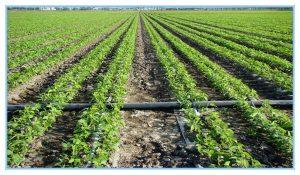 همه چیز در مورد لوله و اتصالات کشاورزی